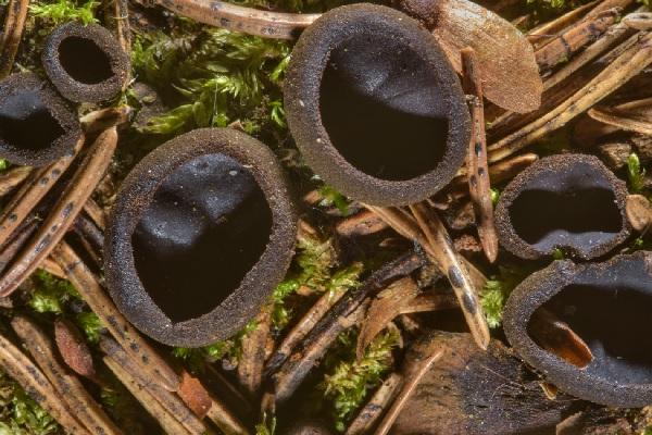 Peptídeo derivado de fungos pode matar bactérias da tuberculose