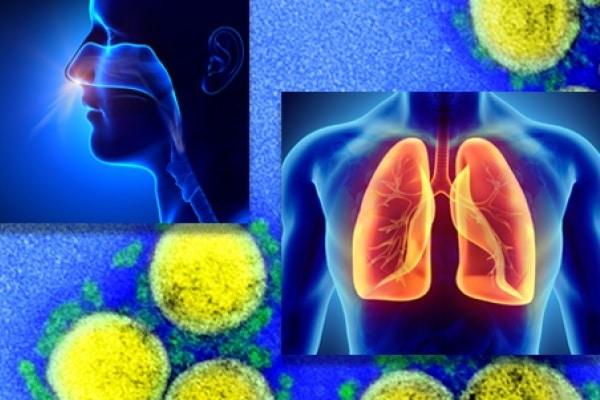 Fonte: Institutos Nacionais de Saúde (NIH)